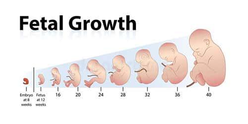 أسباب زيادة وزن الجنين